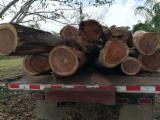 Forest and Logs - Balsamo