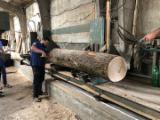 Russian Oak Lumber, 230 mm Thick