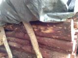 阿拉伯联合大公国 - Fordaq 在线 市場 - 锯木, 檀木