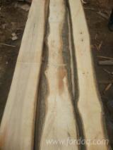En iyi Ahşap Tedariğini Fordaq ile yakalayın - Timberlink Wood and Forest Products GmbH - Kenarları Biçilmemiş Kereste – Loose, Dişbudak