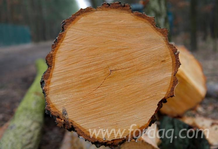 American Walnut/Oak Veneer Logs, 8'