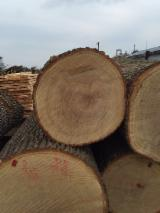 Hardwood  Unedged Timber - Flitches - Boules - Beech and Oak Half-Edged Boards, 24-100 mm