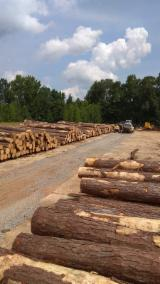 Find best timber supplies on Fordaq - Bois Commercial Wood - Southern Yellow Pine 20+ cm saw log Saw Logs from USA