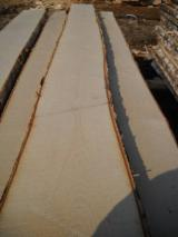 Offers Lithuania - Siberian Birch Unedged Timber