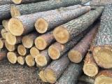 null - Spruce/ Pine Saw Logs from Russia, 1st Grade