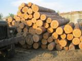 Nadelrundholz Zu Verkaufen - Kiefer - Föhre, Fichte 18 - 57 cm 1st grade Schnittholzstämme Russland Vladimir zu Verkaufen