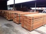 马来西亚 - Fordaq 在线 市場 - 木板, 褐红娑罗双木, 浅红婆罗双木