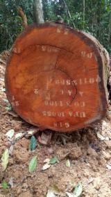 香港 - Fordaq 在线 市場 - 工业用木, 翼形红铁木, 加蓬圆(盘)豆木, 非洲格木