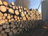 Softwood  Logs - Saw logs, Spruce (Picea abies), 20+ cm