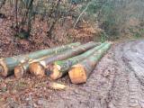 Wälder und Rundholz - Buchen-Stammholz ABC 40+ zu verkaufen Deutsche Sortierung