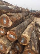 Compra de Trozos Descortezados Eucalipto China