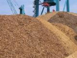 Leña, Pellets Y Residuos - Venta Astillas De Madera De Bosque Haya, Abedul, Roble Baltic States Letonia