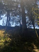 Лес И Пиловочник Южная Америка - Пиловочник
