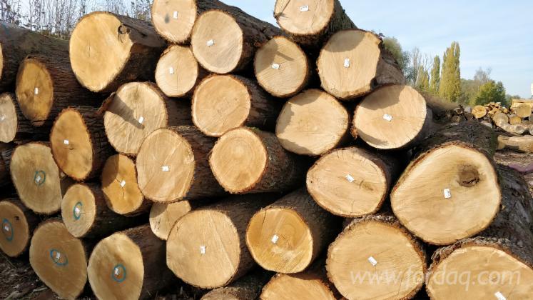 Oak-logs