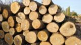 Wood products supply - Oak logs 30+