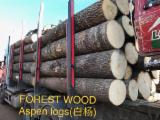 Offers Latvia - Aspen logs