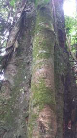 Лісисті Місцевості - Камерун, Tali