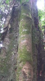 See Woodlands For Sale Worldwide. Buy Directly From Forest Owners - Tali Woodland from Cameroon 2993 ha