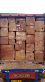 null - Timber logs for sale
