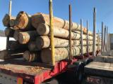 Europe Hardwood Logs - 35+ cm Brown Ash, Beech, Oak Saw Logs from Poland