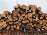 Mature Trees For Sale - Buy Or Sell Standing Timber On Fordaq - Tasmania Cypress Pine Logs[Cupressus Macrocarpa ]