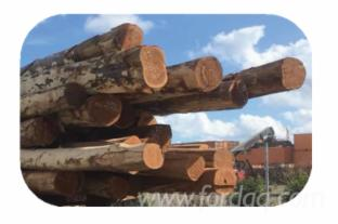 Queensland Native Spotted Gum Logs, 30+ cm