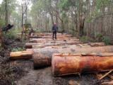 Grumes Feuillus - Vend Grumes De Sciage Karri PEFC/FFC Western Australia