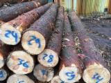 Troncos De Madera Aserrada En Venta - Fordaq - Venta Troncos Para Aserrar Pino Silvestre - Madera Roja Letonia