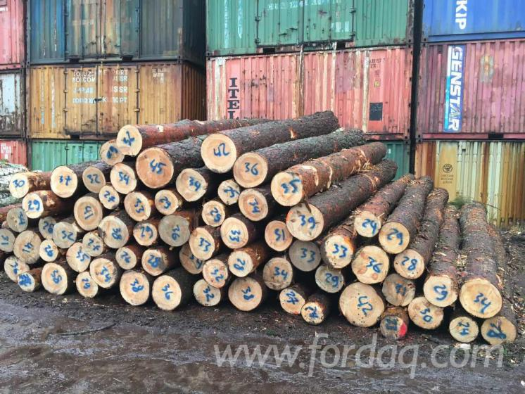 We are Looking Buyers For Pine Logs.