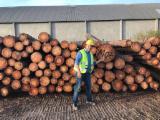 null - Taeda Pine 140-300 mm saw logs Schnittholzstämme China zu Verkaufen