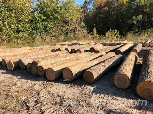 """Hickory Saw Logs Required, 13"""" (diameter)"""