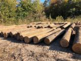 Floresta E Troncos - Troncos Serrados, Hickory