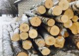 null - Birch / Baltic Timber Logs, ABC Quality