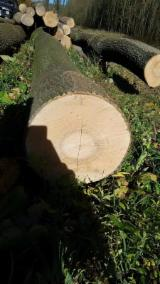 null - Kingwaywood need European ash logs;lengh 3m+;Diameter 30cm+