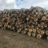 Find best timber supplies on Fordaq - Chang Wei Wood Flooring Enterprise Co., Ltd. - We Need Hard Maple Logs, 12