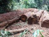 Okan and Padouk logs