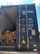 Hardwood  Logs - Colombia Teak Rough Square Logs