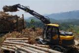 Servizi/Produzione Strutture in Legno per Costruzioni - Cina