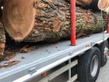 Unedged Hardwood Timber - European Elm Loose Italy