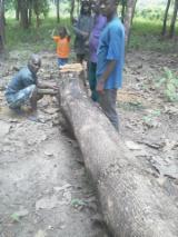 Vind de beste Houtbenodigheden op Fordaq - Zaagstammen, Afrormosia