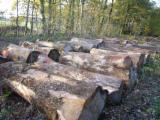 Lasy I Kłody - Kłody Tartaczne, Wiąz