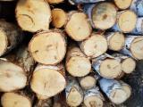 Лес На Корню - Кругляк березы продажа(заготовка)