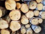 Mature Trees For Sale - Buy Or Sell Standing Timber On Fordaq - Russia, Birch