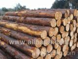 European - Cypress Saw Logs