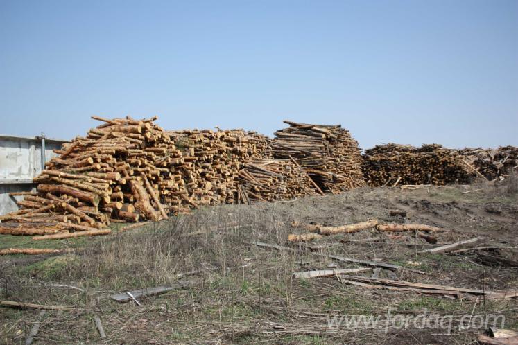 Energie- und Feuerholz