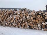 null - Pine, Spruce, Larch, Fir Logs from Siberia