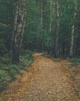 Vidi Šumsko Gazdinstvo Za Prodaju - Kupite Izravno Od Vlasnika Šuma - Moldavija, Bukva