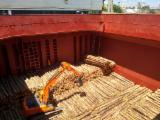 Softwood Logs Suppliers and Buyers - Pine Elliotis Logs and Pine Radiata
