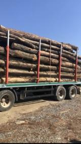 Firewood, Pellets And Residues - Beech Firewood/Woodlogs Not Cleaved