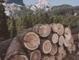 Forêts Et Grumes - Vend Grumes De Sciage Hêtre, Chêne PEFC/FFC